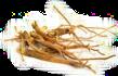 Kořen (Radix), Oddenek (Rhizoma)