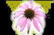 Květ (Flox)