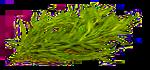 Nať (Herba)