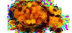 Sušené nebo kandované ovoce, ovoce v polevě