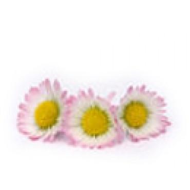 SEDMIKRÁSKA - květ