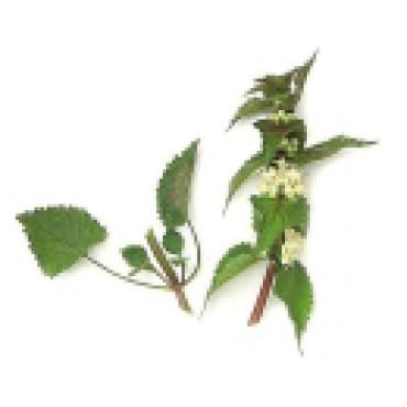 HLUCHAVKA - květ