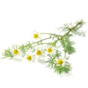 HEŘMÁNEK - květ