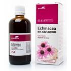 Echinacea se zázvorem bylinné kapky 50ml